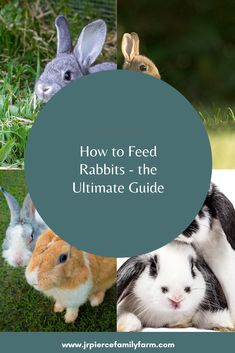 If you're thinking about raising rabbits, these helpful tips will teach you how to feed them. Outdoor Rabbit Hutch, Raising Rabbits, Farm Projects, Rabbit Hutches, Urban Homesteading, Homestead Survival, Organic Farming, Growing Vegetables, Livestock