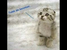 Cute Animals List Cute Animals Wallpaper In Hd! Cute Cats And Kittens, I Love Cats, Cool Cats, Kittens Cutest, Sad Cat Meme, Cat Memes, Karate, Cute Animals List, Cat Themed Gifts