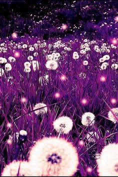 LoveIt | Purple Dandelion Fields