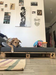 #dog #diy #dogbed #pallet #dogmom #design #home