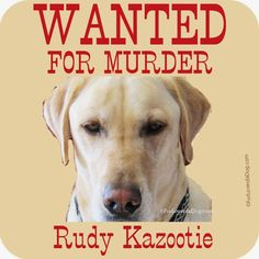 Rudy Wanted For Bunny Murder at Talking Dogs (Talking Dogs at For Love of a Dog) Dog Stories, Dog Safety, Photo Story, Throwback Thursday, Bunny, Humor, Love, Rabbit, Yellow