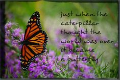 Monarch butterfly on liatris Contemporary Poetry, Butterfly Quotes, Butterfly Drawing, My Pool, Make Ready, Different Flowers, Favorite Words, Poster Making, Monarch Butterfly