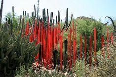 Chihuly Glass at Desert Botanical Garden, Phoenix
