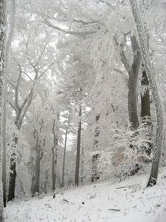 Winter Fairy, Winter Magic, Winter Snow, Winter Time, I Love Snow, Winter's Tale, Winter Scenery, Snow Scenes, Foto Art