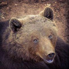 El más fotogénico... #oso #cabarceno #love #animals