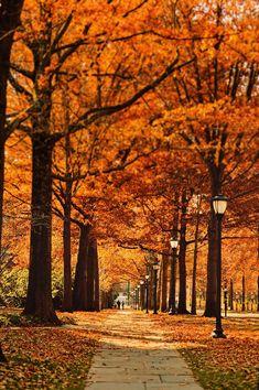 Park, Street, Pathway, Leaf, Fall, Autumn #park, #street, #pathway, #leaf, #fall, #autumn
