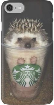 Wouldn't it be awesome if Starbucks gave out hedgehogs? Like, every cup of coffee actually turned out to be a hedgehog. Although I guess all those heartless people that wouldn't want a hedgehog might not be happy. Cute Little Animals, Cute Funny Animals, Funny Animal Pictures, Funny Cute, Cute Pictures, Baby Pictures, Cute Hedgehog, Hedgehog House, Cute Creatures