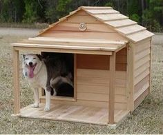 best dog house ever