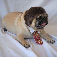Carlin avec cravatte