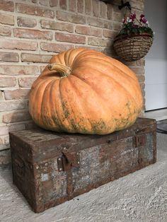 lato_veneziaLATO   Autunno nostalgico. #vsco #igers #igersitalia #photooftheday #picoftheday #instagood #instagram #autumn #autunno #november #novembre #baule #mistery #ghosts #fantasmi #wood #legno #design #zucca #pumpkin #big #igvenezia #venezia #venice #italy #antichita