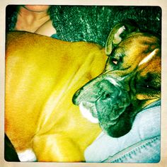 My favorite (tired) boxer!