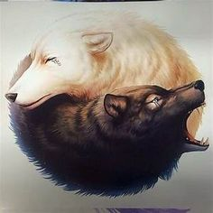 yin yang lobos - Yahoo Image Search Results