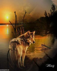 Wolves and Native American Indians