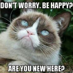 Grumpy cat, grumpy cat meme, grumpy cat quotes, funny grumpy cat quotes, grumpy cat jokes …For the funniest quotes and hilarious pictures visit www. Grumpy Cat Meme, Grumpy Cat Quotes, Cat Jokes, Funny Animal Jokes, Funny Cats, Funny Animals, Grumpy Kitty, Animal Humor, Grumpy Dwarf