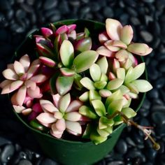I <3 Succulents! This is a great website for identification - and their plants are gorgeous!