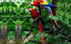 """Aves de colores * """"Guacamayo rojo"""""""