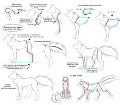 How to drw Wolves Part 3-body by Kimai on deviantART