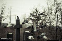birds for subbotnik.posterous.com    www.monocam.org
