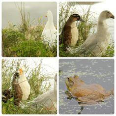 Duck. Duckduck. What?