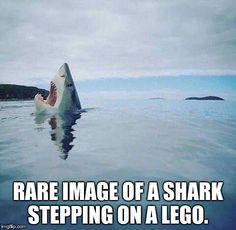 #rare #photo of a #shark #SteppingOnALego #LetsGetWordy