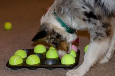 A great food reward puzzle game that can be played inside or out. Nom nom nom.