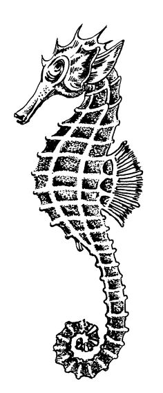 seahorse public domain image (click the pin for more)