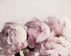 Peony print flower photography girl bedroom decor pink art