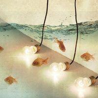 Ideas and Goldfish - Vince Pezzaniti
