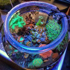 Coral Reef Aquarium, Marine Aquarium, Saltwater Aquarium, Freshwater Aquarium, Salt And Water, Fresh Water, Marine Plants, Cool Fish Tanks, Reefer Madness