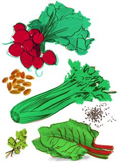 Green Things vegetable illustrations by Holly Wales.