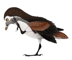 Concornis lacustris - A Dinosaur A Day