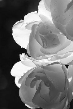 with sensitive lighting, delicacy is possible in black and white