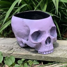 11 best skull planter images skull planter skulls succulents rh pinterest com