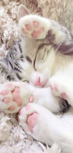 Amazing > Cute Kittens To Draw #repin