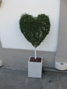Topiary in the shape of a heart!!! Love this topiary!!! Bebe'!!!