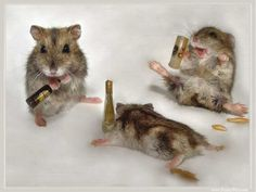 These drunk mice will be sure to make a mess in your home. Do not let them with a sticky mouse trap.