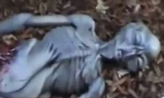 Found mutilated Body of Alien in a Bosque ( FAKE OR REAL? )