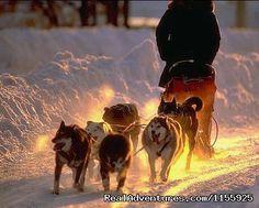 Fast trails, fun days - Dog Sledding Vacations & Dog Mushing Tours