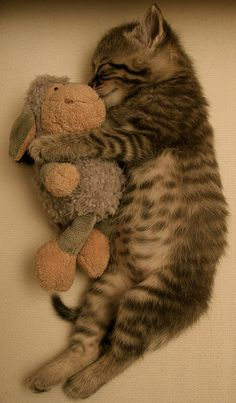 One of my all-time favorite kitten photos. You can just imagine how soft he is and love that round kitty belly. Doesn't hurt that he's a tabby like so many of the cats I have loved in my life.