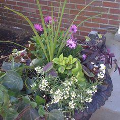 Container Garden Combinations | Via Kelly Donohue