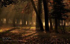 the enchanted park by CarlottafedeRicci
