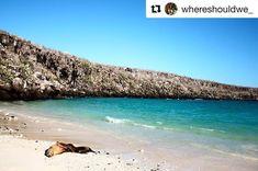 #Repost @whereshouldwe_ with  Nap time... GOGalápagos Islands Ecuador . . #galapagos #galapagosislands #travelwithnaturegalapagos #naturelovers #naturetravels #placestogo #wanderlust #ecuadortravel #galapagos - facebook.com/rlwonderland