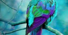 Turquoise and Purple ~ Australian Parrot ^what the previous caption said Is this legit? I never knew we had such a beautiful parrot like this in my own country! Pretty Birds, Love Birds, Beautiful Birds, Animals Beautiful, Exotic Birds, Colorful Birds, Tropical Birds, Exotic Pets, Animals And Pets