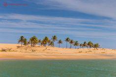 Saiba tudo sobre o delta do São Francisco, um dos passeios mais bonitos e proveitosos nas águas do Velho Chico, o maior rio unicamente brasileiro.