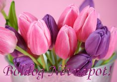 pink and purple tulips, tulips, flowers, bouquet, HD wallpaper HD wallpaper Frühling Wallpaper, Purple Wallpaper, Easter Wallpaper, Unique Wallpaper, Wallpaper Gallery, Wallpaper Ideas, Purple Tulips, Tulips Flowers, Pink Purple