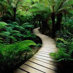 paintingherselfintobeing - Sheri's Blog ...wish I could convince my husband to curve some of our walkways!a.s.