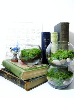 Terrariums.  My new favorite plant project.