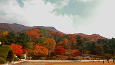 Which of Gangwon school playground