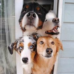 """Here are 17 puppers so over-the-moon THRILLED their hoomans returnedto them, they can't contain their adorable """"greet"""" faces!"""