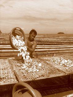 Capiz Roxas City Philippines - seafood capital